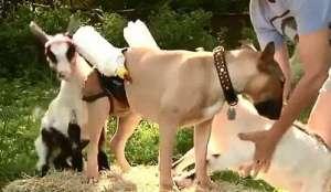 狗狗养护知识介绍